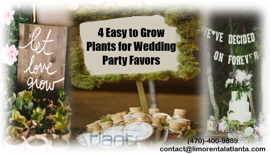 Most Popular Easy to Grow Plants Perfect for Wedding Party Favors